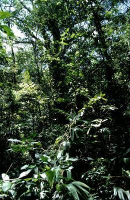 Ambientalistas centroamericanos se oponen a megaproyectos